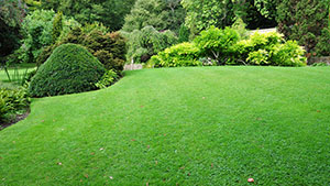 Photo of beautiful green lawn and border.