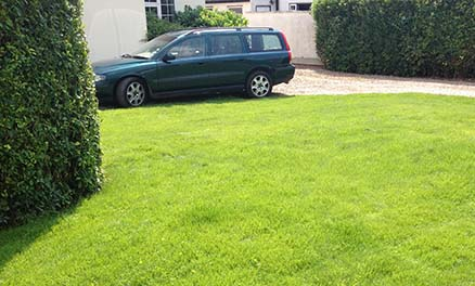 photo of a re-seeded lawn 8 weeks after sowing.