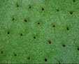 holes made by lawn aerator