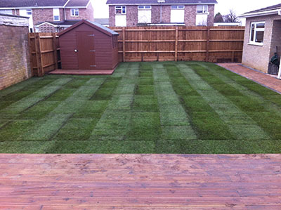 Turf very green. Stripey freshly laid lawn